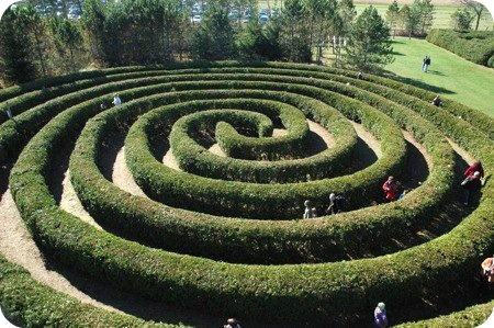 maze at Saunders Farm