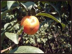 Fruit (*Toia*) Tags: gmt digitalcameraclub
