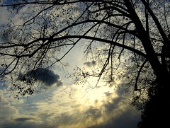 The Sun Sets on Summer (Kurlylox1) Tags: autumn light sunset sky tree fall clouds branches summersend tracery barebranches mywinners