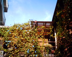 【写真】Morning glory (VQ1005)