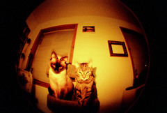 More Cats (lucey) Tags: film 35mm lomography colorsplashflash fisheye colorsplash fisheye2 lululucey