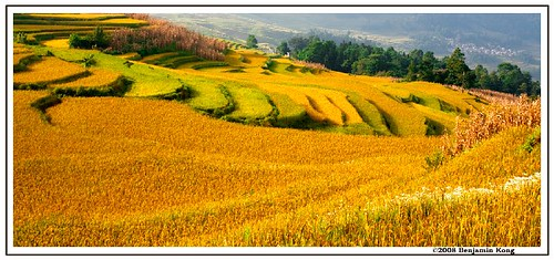 China Photo: Yuanyang Harvest