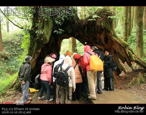 你拍攝的 20081116數位攝影_阿里山之旅061.jpg。