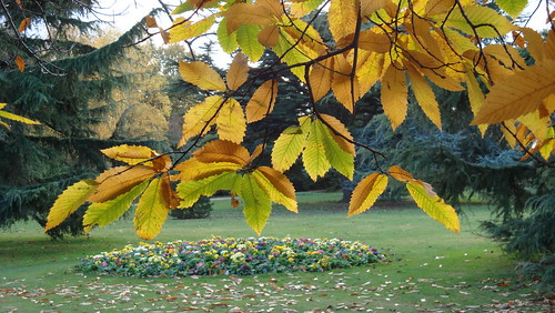Fall's end in Greenwich (47)