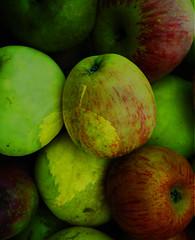 0256 Mas... (orxeira.gz) Tags: verde digital vermelho amarelo folha cor transparncia fiatlux 0256 colourartaward ma orxeira 0256256