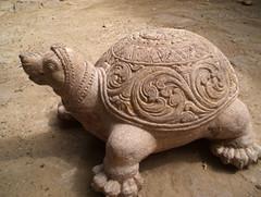 loulisa tortoise