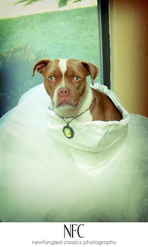 piglet's bridal session 3