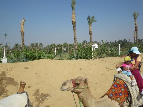 Camel Ride 42