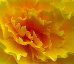 Yellow (moelynphotos) Tags: flower yellow petals flora awesomeblossoms unforgettableflowerscontest4