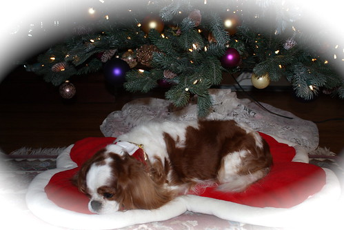 Riley Under The Tree