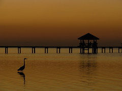 pristine (Debi123 (taking a break)) Tags: sunset heron posing honduras roatan pristine unspoiled sandybay sooc
