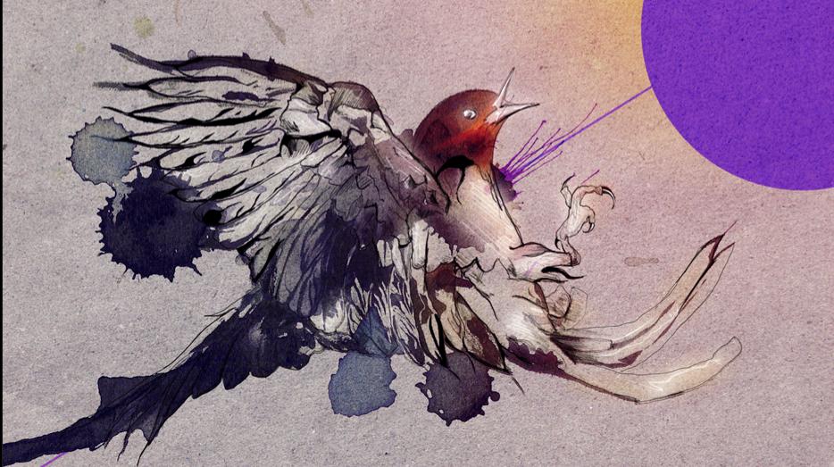 3552501806 f981125825 o BIRDS & DEATHS