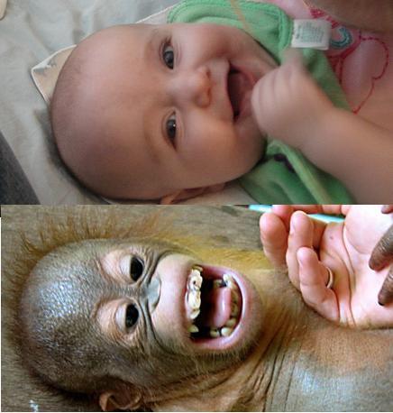 Bebé humano y orangután respondiendo a las cosquillas
