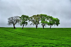 Five Trees Lined in a Lush Green Scottish Field (Magdalen Green Photography) Tags: green scotland cool scottish tranquil hdr scottishlandscape 5268 coolgreen calmnaturescene iaingordon magdalengreenphotography fivetreeslinedinalushgreenscottishfield scotishfield