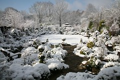 Early morning after April snowfall  1 (Four Seasons Garden) Tags: uk england snow west english nature beautiful marie stone gardens garden four day all open seasons mail picture peaceful competition daily tony national fourseasons winner april urbangarden staffordshire newton conifers walsall englishgarden midlands dailymail blackcountry ngs nationalgardenscheme yorkstone fourseasonsgarden bigpicture2008 charityopendays