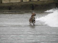 Dog_005 (TELPortfolio) Tags: newzealand dog beach animal wellington islandbay 10millionphotos islandbaybeach jalalspagesanimalkingdom