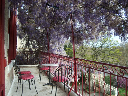 Wisteria at Chateau Ventenac