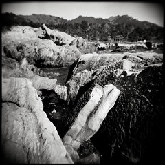 ((mjh)) Tags: california holga fuji diafine neopan pointlobos acros 120n