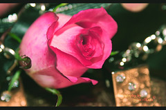Birthday Girℓ ,, read the description  =) ..~ (єїэ7elm elKara єїэ) Tags: birthday pink white black flower green love me rose thanks happy gold all you bokeh gray lightning mn galb