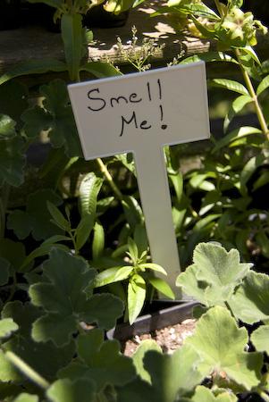 2008-07-05 Filoli Garden-85