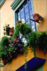buenos das (uteart) Tags: mexico balcony jalisco explore myfave visualart ajijic flowerpots blueribbonwinner mywinners colorphotoaward visiongroup flickrenvy utehagen uteart yellowochrehouse explore071308