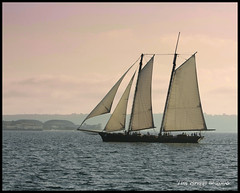 Sailboat (el__vaquero) Tags: ocean california fab sky clouds sailboat coast boat searchthebest pacific sandiego wave explore socal sail southerncalifornia schooner blueribbonwinner canon70200f28l 10faves 40d mywinners ultimateshot diamondclassphotographer flickrdiamond goldstaraward