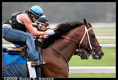 Muscles (Rock and Racehorses) Tags: morning horses horse ny newyork muscles rain ride exercise mud saratoga strong pan d200 thespa panning rider thoroughbred sloppy slop mywinners mywinner exerciserider