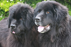 Jinx & Oscar (Canis Major Water Group) Tags: oscar jinx