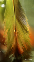 Green Feather (Nouf Alkhamees) Tags: light green yellow canon feather alk nono alkuwait