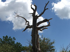 Dark Tree with Twisted Branch