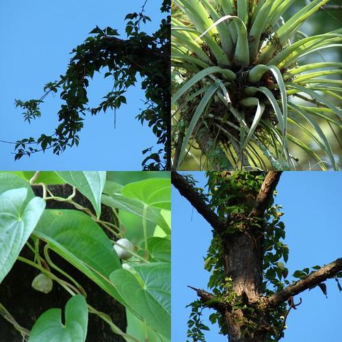 Wild Plants Collage