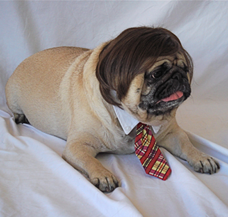 dog in wig and tie