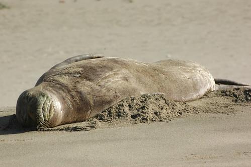 Kauai - Kalalau Beach - Monk Seals Resting