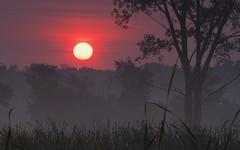 [フリー画像] 自然・風景, 朝日・朝焼け・日の出, 霧・霞, 樹木, アメリカ合衆国, 201004210500