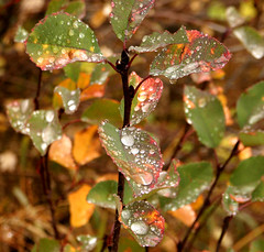 Autumn raindrops on the forest floor (Outrageous Images) Tags: autumn fall uncut leaf october colorado fallcolors jewels grandmesa outrageousimages davewadsworth