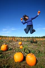 288 - She's Got A Swell Pair (Universal Stopping Point) Tags: field jumping farm lexington kentucky pumpkins orchard 365 pumpkinpatch unaltered project365 swelldesigner