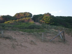 Front of dune 2 (cobalt.penguin) Tags: beach dunes sydney peninsula avalon barranjoey