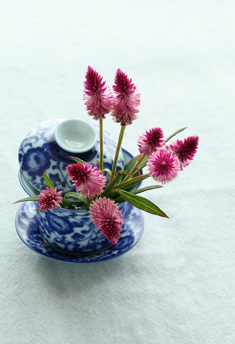 blossoming tea cup