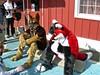 Fursuiters at Blackie's