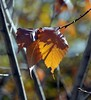 End of autumn, Almaty, Kazakhstan, 26 October 2008 (Ivan S. Abrams) Tags: arizona ivan getty abrams gettyimages smörgåsbord tucsonarizona 12608 onlythebestare ivansabrams trainplanepro pimacountyarizona safyan arizonabar arizonaphotographers ivanabrams cochisecountyarizona gettyimagesandtheflickrcollection copyrightivansabramsallrightsreservedunauthorizeduseofthisimageisprohibited tucson3985gmailcom ivansafyanabrams arizonalawyers statebarofarizona californialawyers copyrightivansafyanabrams2009allrightsreservedunauthorizeduseprohibitedbylawpropertyofivansafyanabrams unauthorizeduseconstitutestheft thisphotographwasmadebyivansafyanabramswhoretainsallrightstheretoc2009ivansafyanabrams abramsandmcdanielinternationallawandeconomicdiplomacy ivansabramsarizonaattorney ivansabramsbauniversityofpittsburghjduniversityofpittsburghllmuniversityofarizonainternationallawyer