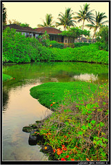 Waiakauhi, Ancient Hawaiian Fishpond (j glenn montano 3) Tags: fish island four hawaii restaurant big ancient seasons glenn shrimp historic hawaiian kona montano hualalai fishpond kailua kaupulehu colourartaward waiakauhi justinaino