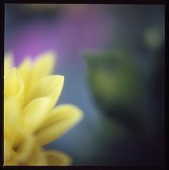 Idea of space  (Sense beauty of Japan) (satoshi  denuclearization) Tags: loveit chapeau iq mb soe breathtaking lifeisbeautiful goldenheart supershot photographia pequeascosas bej amazingcapture fineartphotos bokehlicious supershots diamondheart crystalaward flickrdiamond theboldflower heartawards newacademy macromarvels thisiswhyilovephotography natureislovely topphotography macroflowerlovers natureselegantshots multimegashot allkindsofbeauty rubyphotographer stunningplanetearth flickrnumberone mikesdance michelangelosbox umbralaward goldenheartaward simplythebest~flowers justproject superamazingmacrosaward thelightpainterssociety panoramafotogrfico thefeelofphotography photographerparadise mallmixstaraward dragondaggerphoto cffaa flightsoffancyforever ~absolutegoldenmasterpiece~