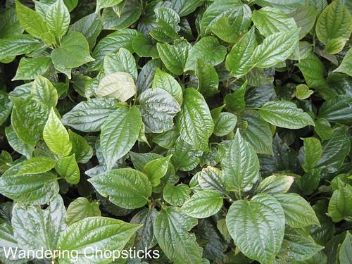La Lot (Vietnamese Wild Betel Leaf)