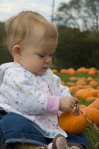 pumpkins 08-31