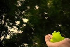 and I think to myself, what a wonderful world <3 (crimson.apple) Tags: life green love bokeh live frog lalala hbw bokehshape heartshapebokeh
