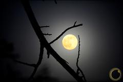 .. ..      ( Maitha  Bint K) Tags: aplusphoto