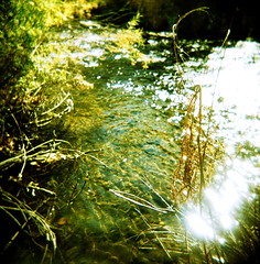 *0012 (fotovivo / peevish me) Tags: blue autumn brown sun sunlight black green 120 film nature wet water grass leaves yellow sparkles square landscape holga xpro crossprocessed flora availablelight longmont crossprocess branches 200iso textures ripples rays agfa expired rsxii dappledsunlight localsights bouldercounty stvrainriver