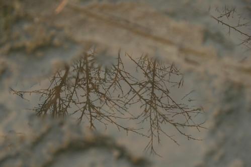 你拍攝的 20081116數位攝影_阿里山之旅139.JPG。