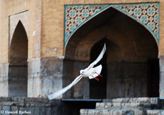 The Seagull (Hamzeh Karbasi) Tags: bridge iran freezing persia  isfahan    antonchekhov theseagull khaju   khadjoobridge