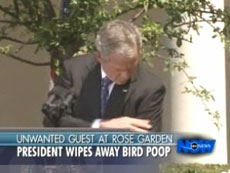 bush bird poop